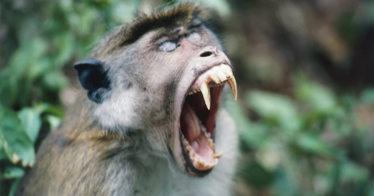 I rant, therefore I am. - Mad Monkey Maintenance inc.